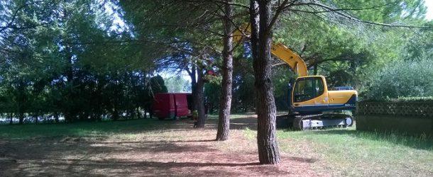 Lavori di alleggerimento ai pini di Piazza De Andrè a Fornacette