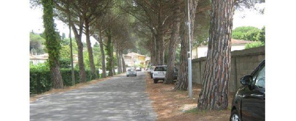 Vicopisano: dal 13 febbraio al 15 marzo potatura alberi di Viale Diaz