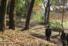 Proseguono i lavori al bosco di Montecchio, entro la primavera l'area verde di Calcinaia sarà completamente riqualificata