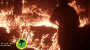 Azioni urgenti post-incendio, lunedì primo ottobre incontro a Vicopisano alle 18.00