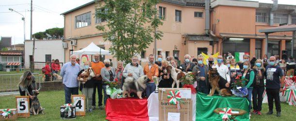 Amos è il più bello d'Italia.. ed ha 4 zampe..!!!